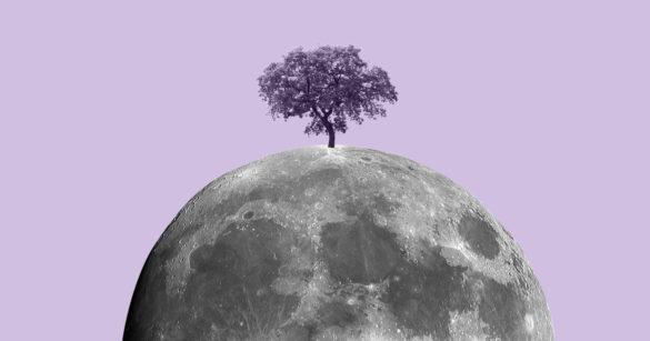 дерево на Луне иллюстрация