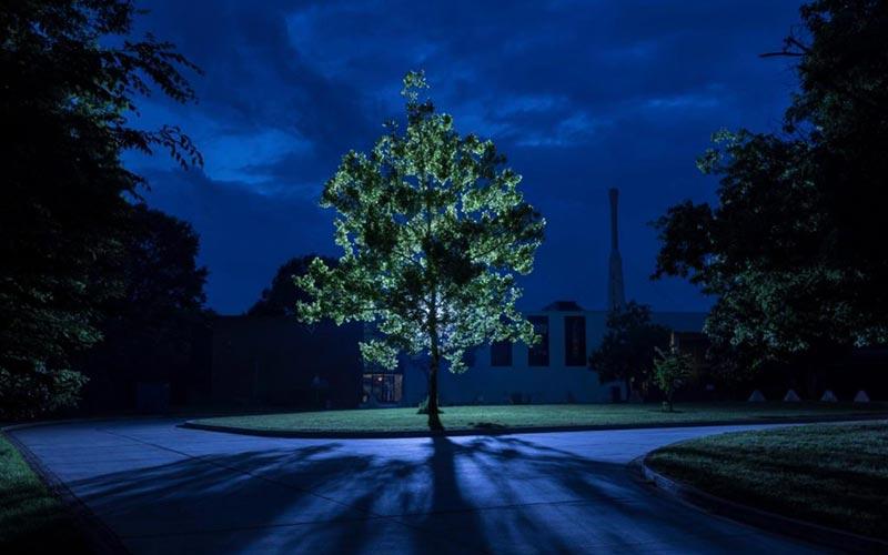 «лунное дерево» в Америке