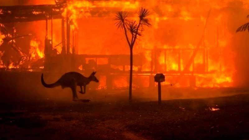 Пожары в Австралии фото