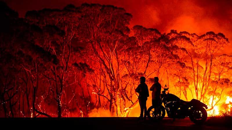 Горящие деревья в Австралии фото