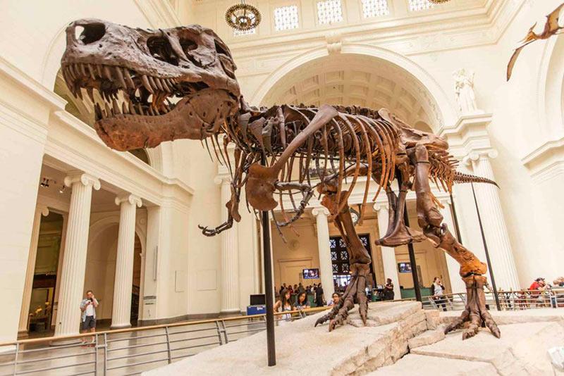 Скелет динозавра фото