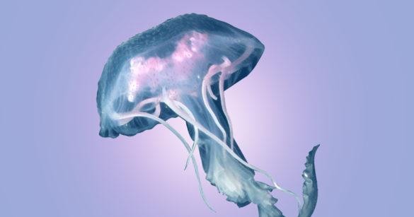 Медуза иллюстрация