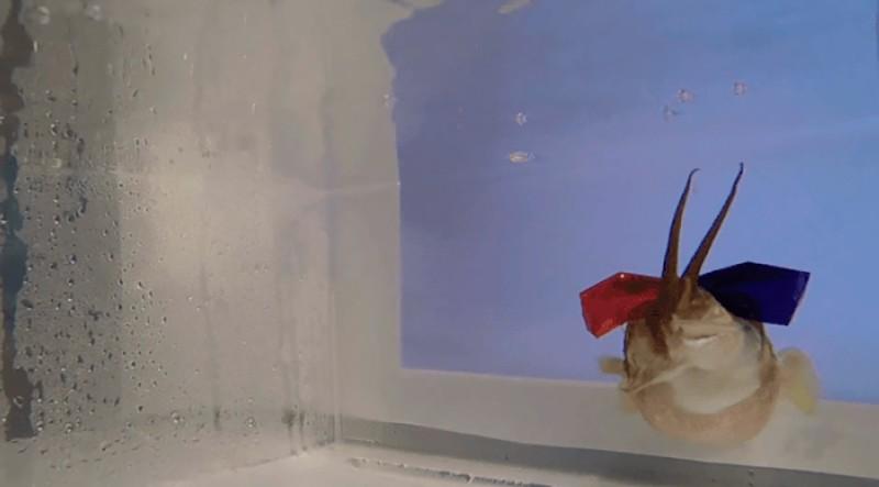 3D-очки на каракатице фото