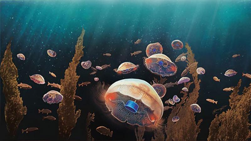 Медузы с микроэлектронными протезами картинка