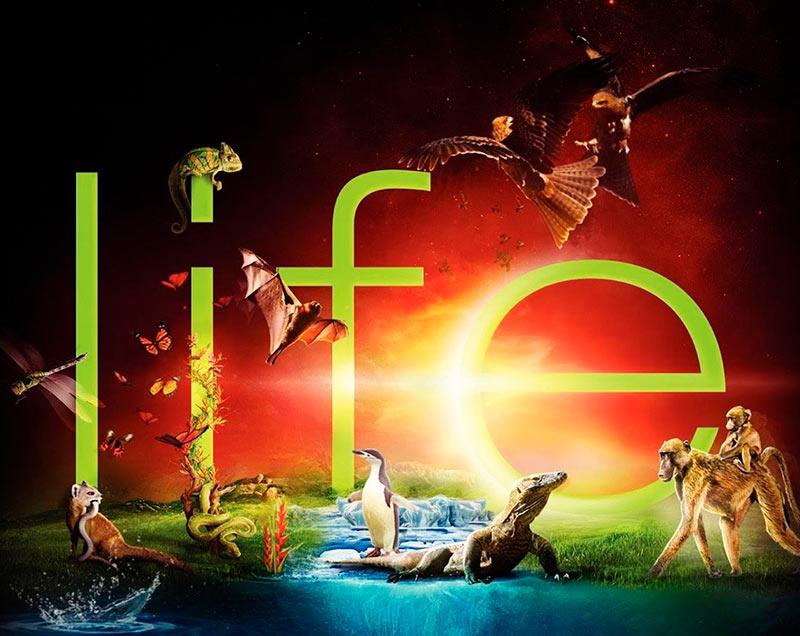 Сериал «Жизнь» постер