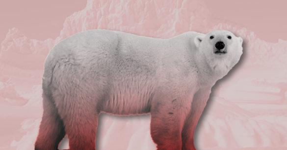 Окровавленный белый медведь фото