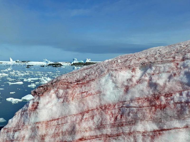 Красный снег фото