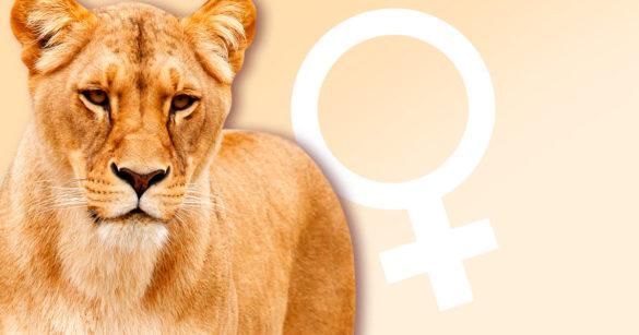 Львица фото