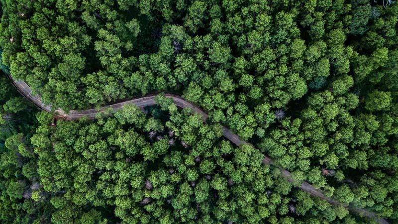 Деревья со спутника фото