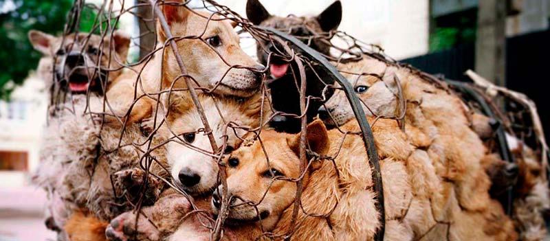 Собаки в сетке фото