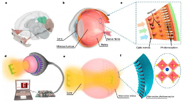 Светочувствительность исскуственного глаза схема