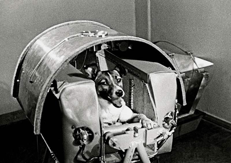 Первая собака в космосе – Лайка