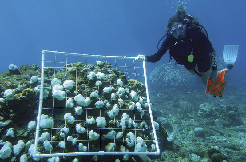Изучение кораллов под водой
