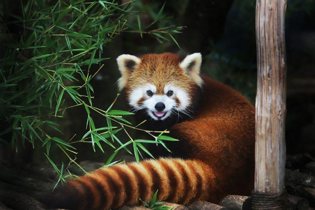 В Австралии обнаружили два новых вида млекопитающих