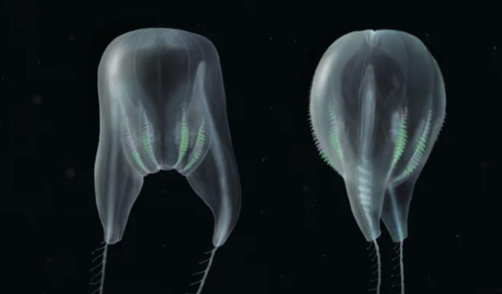 Ученые открыли новый вид глубоководных морских существ